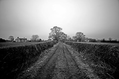 Down your way....... (Dafydd Penguin) Tags: way point landscape nikon cheshire sigma vanishing bridle d600 sigma14mm