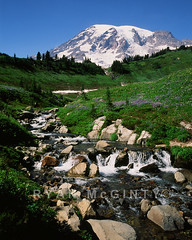 Mount Rainier Stream and Wild Flowers (Ryan McGinty) Tags: summer usa film 35mm landscape washington nationalpark stream mountrainier wildflowers velvia50 contaxg2 g45 ryanmcginty