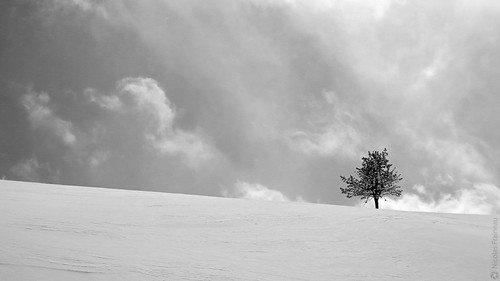 Arbre solitaire - Alone tree