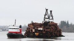 Seaspan Royal Dumping A Load Of Logs At Port Haney. (rog45) Tags: canada canon bc logs 7d 18200 barge fraserriver porthaney rog45 40d f2135 seaspanroyal selfdumpingbarge