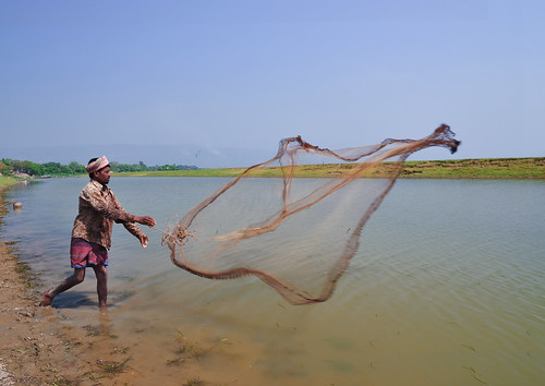 Casting a net in Bangladesh, . Photo by Balaram Mahalder, 2010.