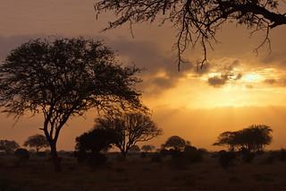 Nella savana, il sole che nasce