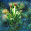 ~~ a sprite at work ~~ (xandram) Tags: flower photoshop sprite manipulation textures greens