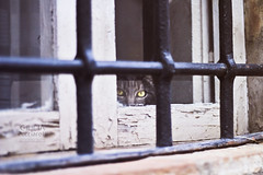 meow! (pucciarellic) Tags: windows cat canon grate eos 50mm finestra occhi sguardo 600 land meow gatto yelloweyes ceri paesino gialli 600d