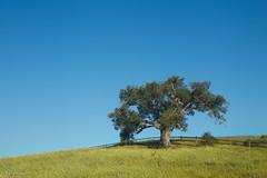 California Spring (Wildphotography - Barry Rowan) Tags: california tree nature grass santabarbara fence landscape spring liveoak southerncalifornia santabarbaracounty flowersplants sanmarcosfoothillspreserve