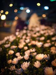 flowers (hyossie) Tags: flowers japan night dof bokeh olympus panasonic  osaka omd nakanoshima em5 20mmf17