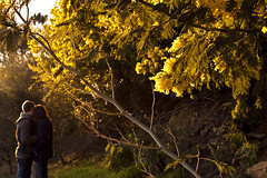 Love (luisfilipesf) Tags: trees sunset love portugal yellow landscape woods couple embrace vilareal rgua maro medres