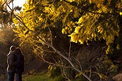 Love (luisfilipesf) Tags: trees sunset love portugal yellow landscape woods couple embrace vilareal régua marão medrões