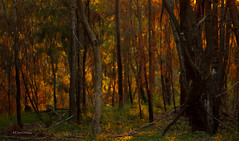 the light beyond.... (loobyloo55) Tags: trees light sunset orange brown sun green nature grass 50mmlens f18ii
