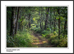 On Gallows Hill (Chalky666) Tags: tree trees wood woodland forest footpath foliage westsussex southdowns painterly art landscape pinnaclephotography