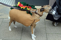 A genuine Hot Dog (Daves Portfolio) Tags: theamericaground hastings independentsday 2016 event thingstodo commemoration america celebration hotdog canine dog costume sausage
