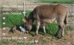 Geburtstagskarte fr  Deborah (Tierrztin) * Birthday card for Deborah (Veterinarian)  * Tarjeta de cumpleaos por Deborah (Veterinaria) *   .   DSC09719-001 (maya.walti HK) Tags: 2009 250716 birthday birthdaycard birthdaycards burros cleopatra congratulations copyrightbymayawaltihk cumpleao donkey esel espaa felicidades flickr geburtstag geburtstagdeborah2016 geburtstagskarte geburtstagskarten glckwnsche glckwunschkarte sonydscw100 spain spanien