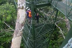 60071597 (wolfgangkaehler) Tags: 2016 southamerica southamerican ecuador ecuadorian latinamerica latinamerican rionapo rionapoecuador rionaporiver rainforest coca cocaecuador laselvalodge observationtower tower people person tourism tourist