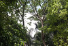 UrbanTreeCare03-Miti Ruangkritya (bigtreesproject) Tags: 66835548622 mitiruangkritya miti139hotmailcom mitimiticom wwwmiticom