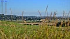 DSC_0037n wb (bwagnerfoto) Tags: regly csernyd hills dombok hgel landschaft landscape tjkp templom church village falu dorf field outdoor tolna