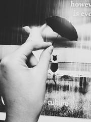 Helping Hands (alyee5) Tags: computerbackground caring umbrella filter blackandwhite cat pig rain hand