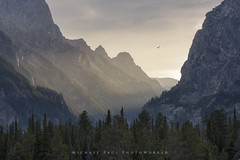 Freedom of Flight (facebook.com/michaelpaulphotoworks) Tags: grandtetonnationalpark tetonnationalpark tetons mountains sunset canyon wyoming jacksonwyoming hawk wildlife landscape