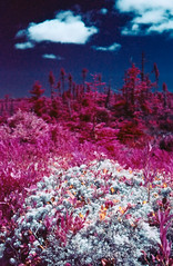 Fallen Cloud (Markus Jork) Tags: leica m3 summicron 50mm colorir infrared aerochrome slide film fpp