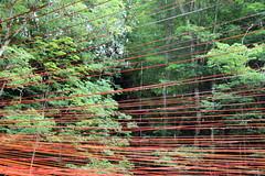 Des filets d'eau sur chaque fil. (Dik) Tags: lt ballades estivales auvergne ambiances impressions couleurs ciel sensations rverie art nature festival horizons sancy plaisir dike