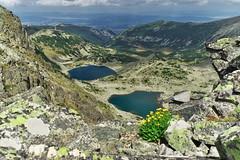 (sevdelinkata) Tags: mountain landscape lakes flower rila bulgaria