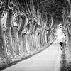 lonesome rider (Rainer ❏) Tags: radfahrer cyclist cycliste allee platanen sycamores routedelabastide escales languedocroussillon südfrankreich sommer2016 sw bw bn rainer❏