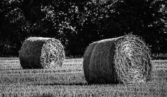 Resting On A Bed Of Nails (IAN GARDNER PHOTOGRAPHY) Tags: stubble hay straw bails farming landscape monochrome blackwhite blackandwhite autofocus