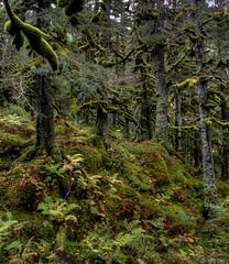 Autumn Woods (tpeters2600) Tags: alaska autumn fall canon eos7d hdr photomatix tamronaf18270mmf3563diiivcldasphericalif forest