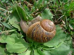 P1100715 (ezioman) Tags: alghero sardinia italy calabramassa seaside mediterranean sea coast portoconte