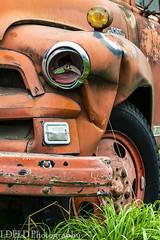 NT2.0385-MRNP150919_152882-2 (LDELD) Tags: kent washington unitedstates us chevrolet truck farm 6500 chevy pickup