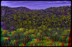 Neyes Provincial Park 3-D / Anaglyph / Stereoscopy / HDR / Raw (Stereotron) Tags: north america canada province ontario lake forest woods tree plants outback backcountry indiansummer autumn fall anaglyph anaglyph3d redcyan redgreen optimized anaglyphic anabuilder 3d 3dphoto 3dstereo 3rddimension spatial stereo stereo3d stereophoto stereophotography stereoscopic stereoscopy stereotron threedimensional stereoview stereophotomaker stereophotograph 3dpicture 3dglasses 3dimage twin canon eos 550d yongnuo radio transmitter remote control synchron in synch kitlens 1855mm tonemapping hdr hdri raw
