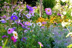 Cottage Garden (ivlys) Tags: odenwald neutsch bauerngarten cottagegarden blumen flowers bunt colourful nature ivlys