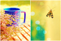 The only difference between good day and a bad day is your attitude. (mintukka) Tags: mug plants flowers dippy diptych butterfly coffee bluemug colors colorful stilllife window