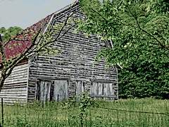 Webb Rd White barn (wildrosetn39) Tags: infocus oneface longshot highquality barn white painted redroof wood disrepair structure rural summer