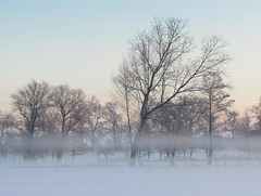 a line of mist (Foto Dominic) Tags: morning trees winter mist snow fog nevel bomen sneeuw ochtend mygearandme mygearandmepremium mygearandmebronze mygearandmesilver mygearandmegold mygearandmeplatinum mygearandmediamond fotodominic rememberthatmomentlevel4 rememberthatmomentlevel1 rememberthatmomentlevel2 rememberthatmomentlevel3