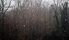 Snowpocalypse (Ubere) Tags: snow neige