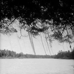 Delta Sungai Kelantan II (fuadabd) Tags: travel analog mediumformat river square landscape tl extreme sunny places shade 400 28 pentacon six majid manualfocus kok jeti kelantan tumpat biometar selfdevelop ultrafine blackandwhitefilmphotography