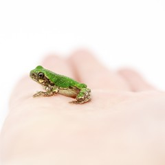 A Frog in the Hand (AB 7) Tags: macro green hand bokeh frog