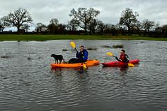 Depth of Field? ....about 1.5 metres actually :) (Dafydd Penguin) Tags: dog nikon kayak sigma kayaking floods nikkor35mm nikond5100
