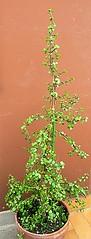 036 (Aldo433) Tags: flowers italy italia fiori abruzzo piantagrassa