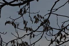 20130222-_DSC8069 (Fomal Haut) Tags: nikon nagoya  gifu lifelog  d4 iamas  photodaily