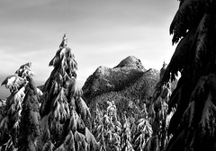 Coquitlam Mountain with snowy b&w trees (Christopher J. Morley) Tags: trees winter bw white mountain snow black vancouver wednesday landscape nikon bc explore coquitlam d600 alw achromatic