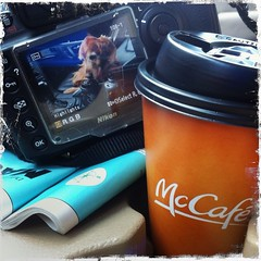 9-52 over 5589 km apart, only the coffee is the same (Dave (www.thePhotonWhisperer.com)) Tags: vacation dog coffee car goldenretriever map maui mcdonalds latte mccafe nikond700 52weeksfordogs