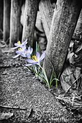 Frühling / Spring !?