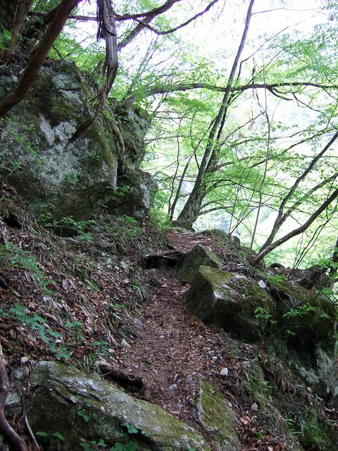 激しい上り道が続きかなりバテます… 尾白川渓谷