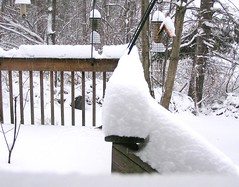 8 Inches of White Stuff (mudder_bbc) Tags: winter snow newyork fourseasons columbiacounty