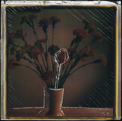 Polaroid Etching (christait) Tags: flowers etched canada colour home studio polaroid sx70 manipulation alberta vase scratched folding lethbridge impossibleprojecttzartistic backingremoved