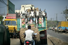 Not so public transport (N A Y E E M) Tags: street truck cattle windshield bangladesh sadarghat chittagong banglabazaar