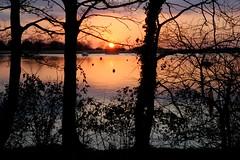 Oulton Broad sunset silhouettes (Kirkleyjohn) Tags: trees sunset sun reflection water silhouette reflections atardecer treesilhouette suffolk sonnenuntergang pôrdosol coucherdusoleil norfolkbroads oultonbroad treesilhouettes