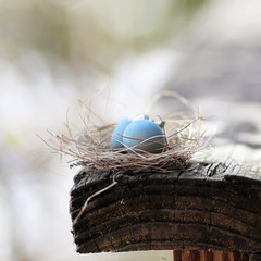 perching... (..Ania.) Tags: blue nest small perch eggs railing birdnest robinegg robinblue