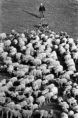 Sheep Herder 6 (ConejoThruTheLens) Tags: sheepherder conejothroughthelens northranchthousandoaks
